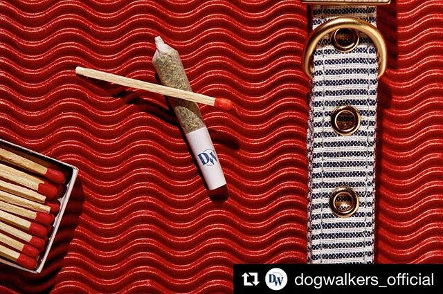 #ItsAboutTheJourney...check out @dogwalkers_official, #anotherone from a recent shoot for @gtigrows. - - - - #productphotography #studiophotography #tabletop #advertising #chicago #dogwalker #dog #collar #mmj #mmjpatients #cannabis #cannabiscommunity #noshake #prerolls #canon #macro #100mm #profoto #c1 #captureonepro #retouching #post