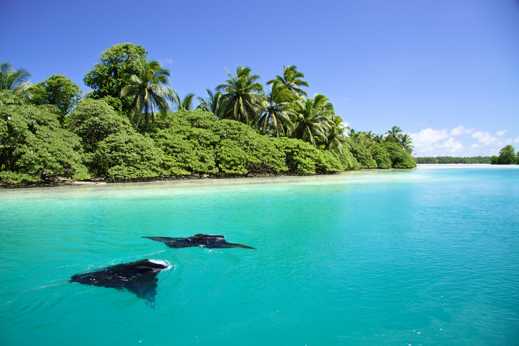 island-conservation-science-palmyra-atoll-line-islands-usa-photography-25.jpg