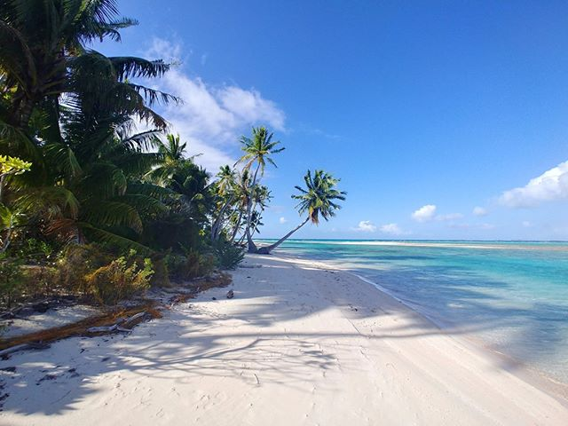 Every time we visit one of our beautiful islands, it never gets boring taking photos of the soft sandy beaches and beautiful palm trees.  We want you to join us on our next expedition, visit the link in our bio to find out more #winning #loveit #traveller #lovetotravel #adventureseeker #wonderfulplaces #goexplore