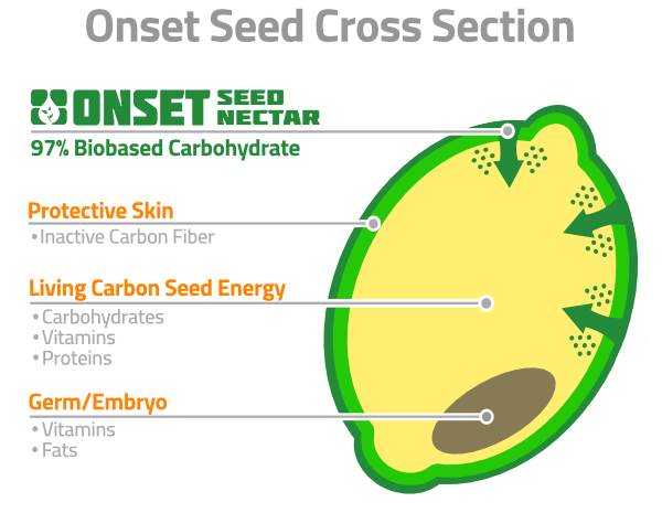 New Onset Seed Diagram.png