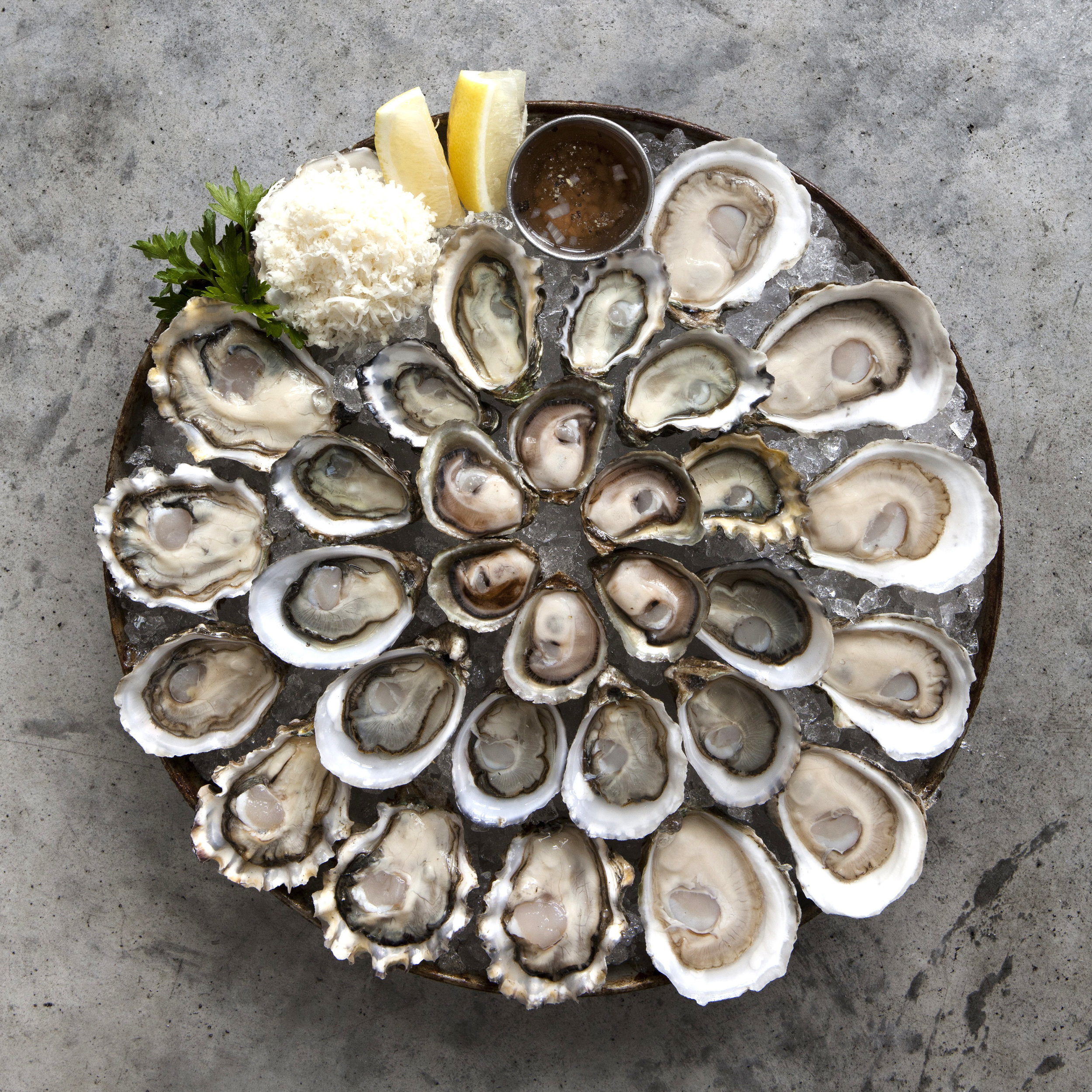 oyster_square.jpg