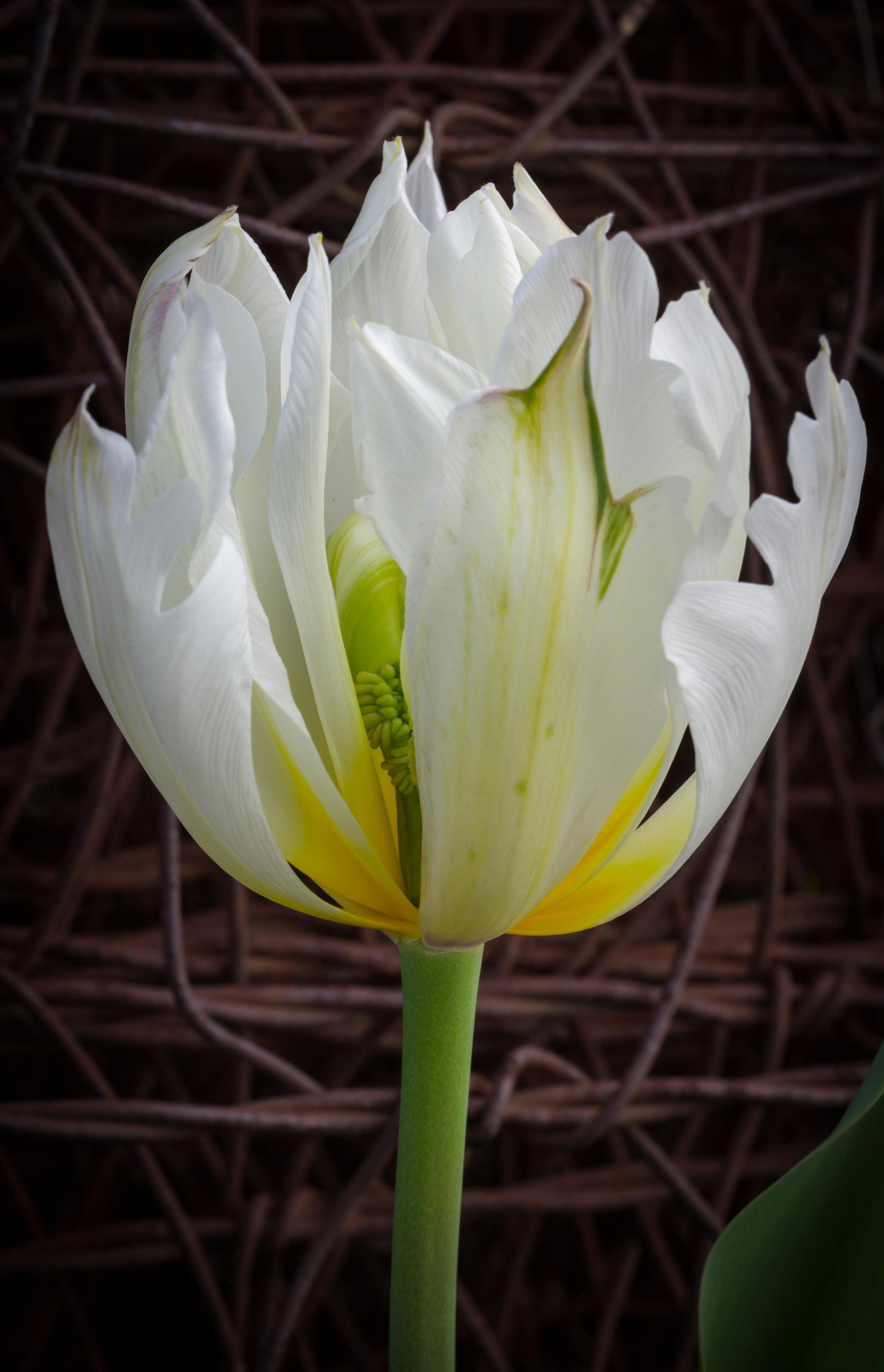 Park Winters Blooms-2771.jpg