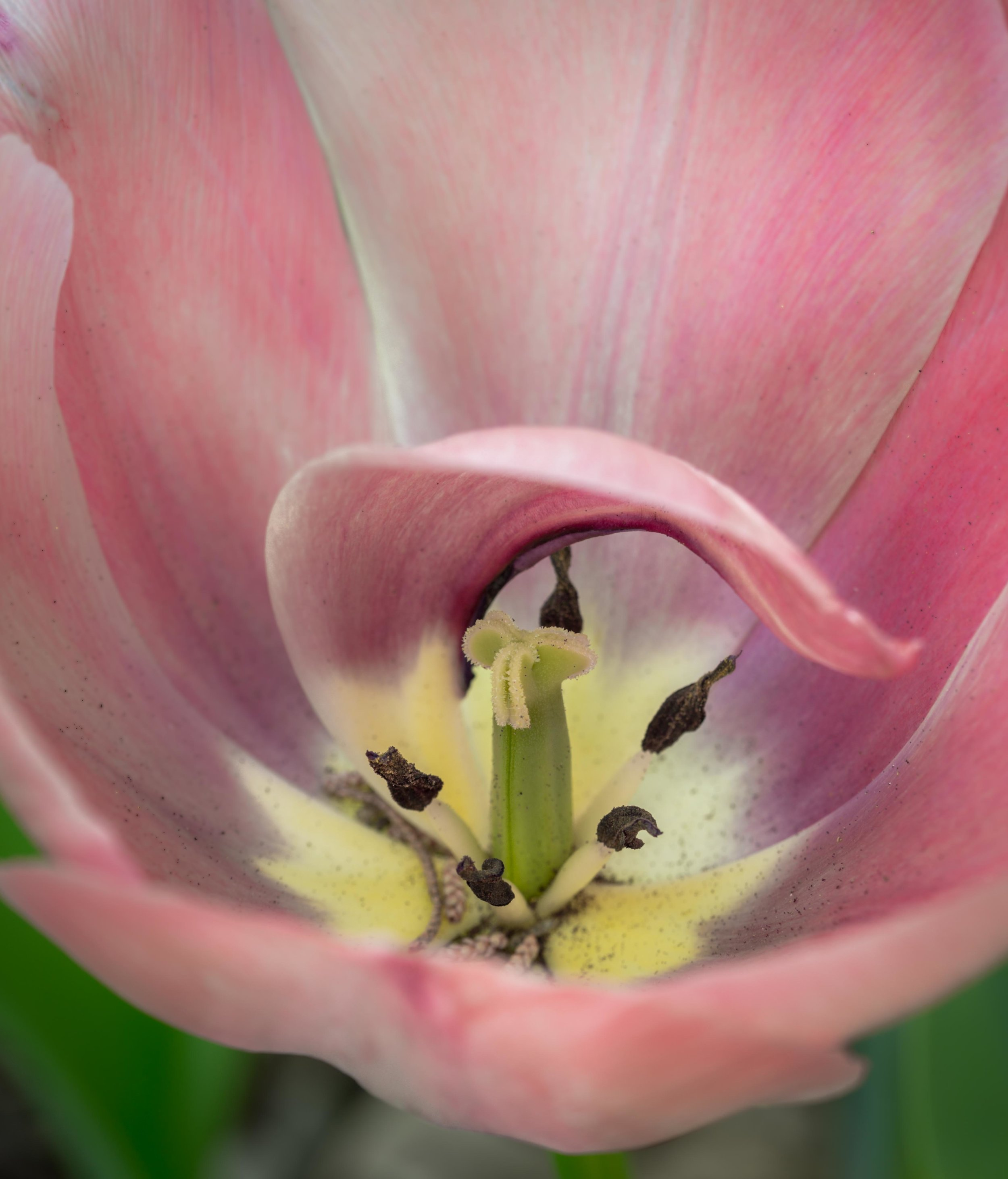 Park Winters Blooms-2943.jpg