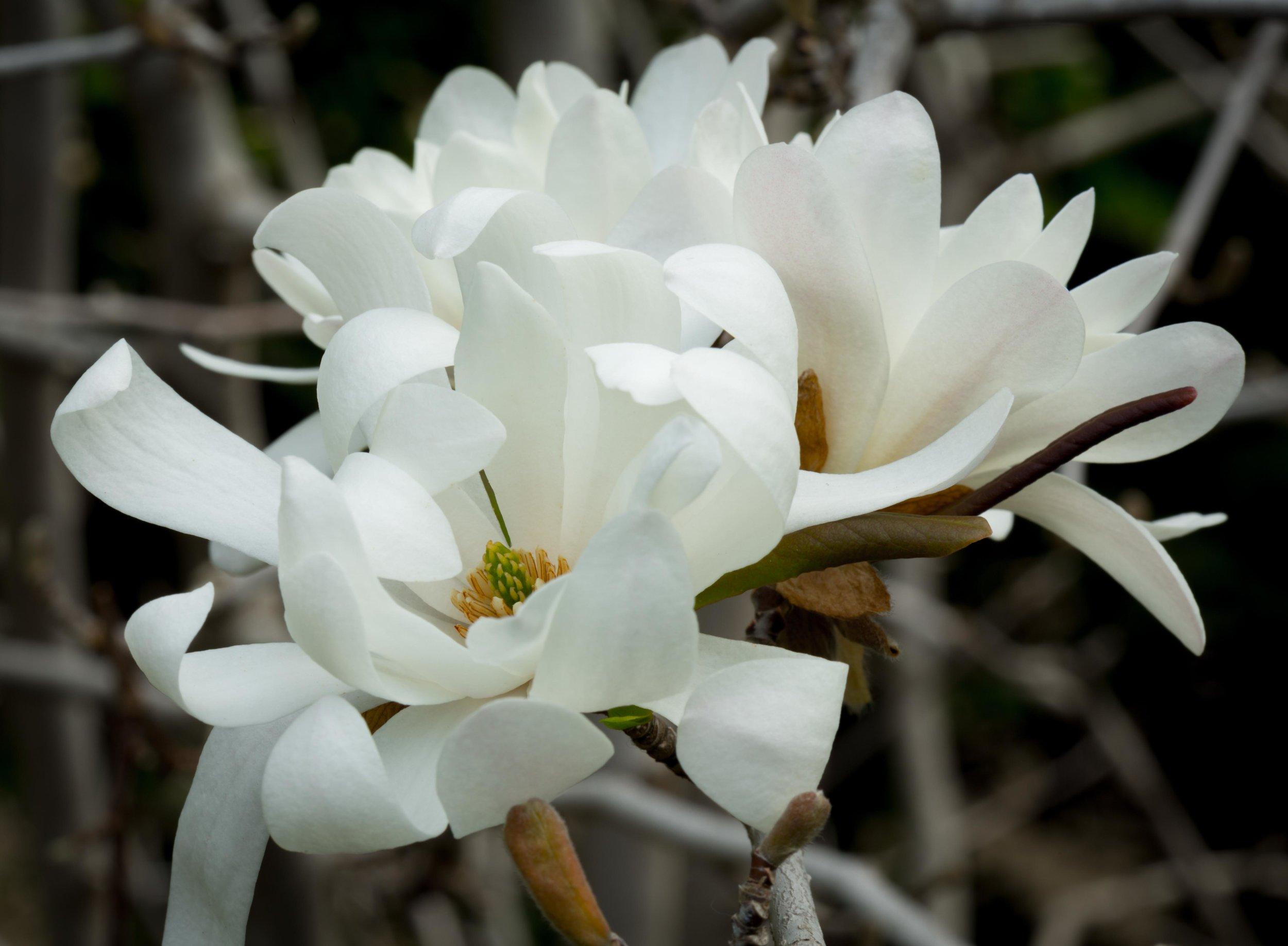 Park Winters Blooms-2997.jpg
