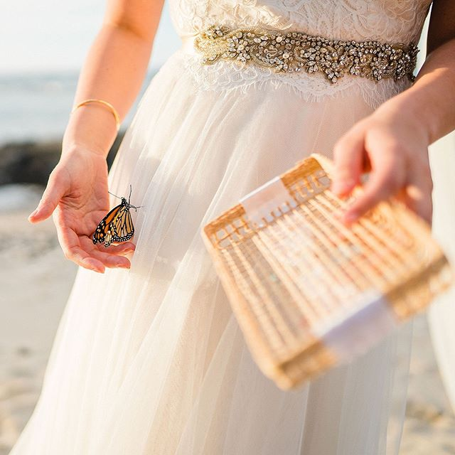 The butterfly counts not months but moments, and has time enough. @fairmontorchidweddings @fairmontorchid @fletchphotography . . . . . #strictlyweddings #hawaiieventphotographer #pacificweddings #100layercake #junebugweddings #hawaiiphotographer #hawaiiweddingphotographer #bridalbliss #bridalgowns #butterflybride #butterflywedding #theknot #pacificweddings #fletch #fletchphotography