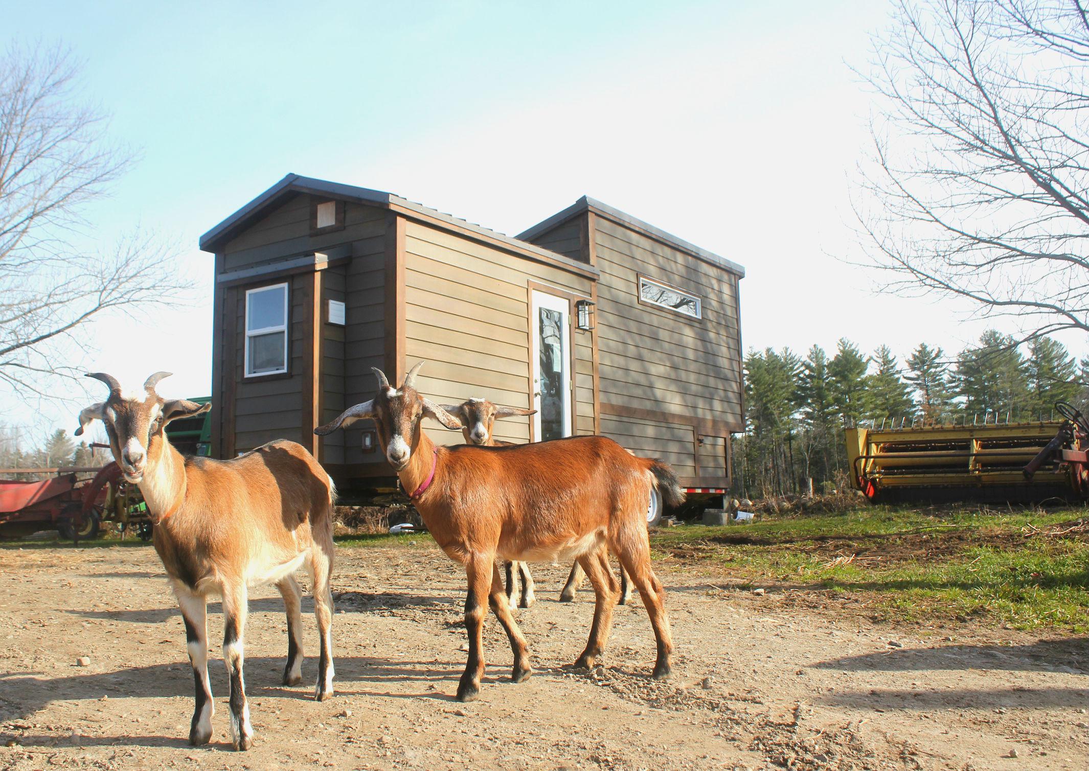 Nova-Tiny-House-Crafters-Goats (1).jpg