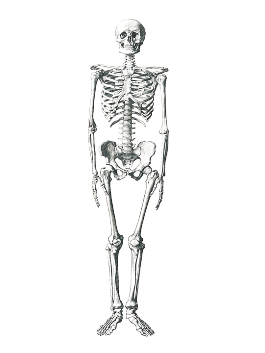 skeleton-504784_960_720.png