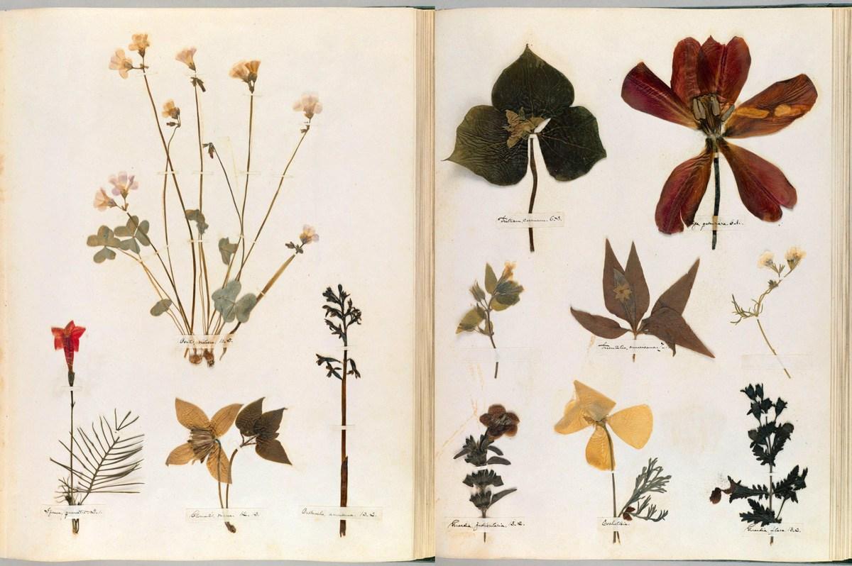 emilydickinson_herbarium000.jpg