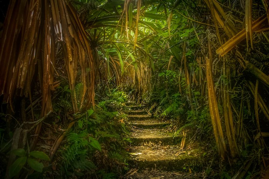jungle-path-in-sumatra-PCHEATB copy.jpg
