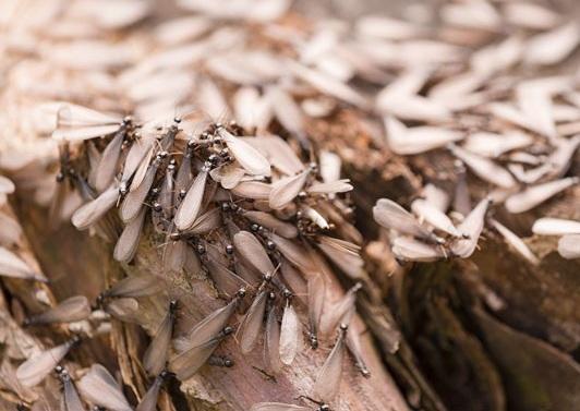 atlanta_termite_inspection.jpg