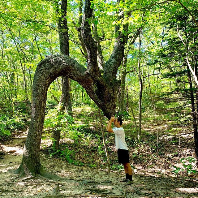 "I met the Dragon Tree in Pisgah National Forest. Some say it's an old Native American trail marker. ***Also, I've been out of commission lately with ulcers in my throat and around my voice box, due to a bunch of things I cannot explain (stress, and LPR). Been hiding out, bumming, can't sing for months, had to reschedule recording dates until December. But it's all gonna be alright, just needed to break my silence. I'm pretty much in the Reconstruction grief stage. Kinda see it like I cracked pretty hard and some much needed light is getting in. When I kicked and screamed about changing recording dates, Corey said to ""go with the flow,"" which would normally make me scream louder; but for some reason the simple saying has been a light bulb. It's the whole ""you're blessed when you're at the end of your rope"" thing. With nothing left to hang onto you just kinda release at some point. I was playing in the French Broad river back in July, trying desperately to escape myself and my self-consciousness, fear and my mind in general — it was incredible. I held on to this stone against the current and then let go... and I just did what the river does for a whole minute! A free-bird minute. And before I let go of the stone I watched dragon flies mating right in front of me and noticed how they didn't care that I was watching. They just did what they do. I want more of that. So here's to breaking and rebuilding! Sickness and health! Moons and suns! Flutes and guns! Dams and Rivers! Death and New Life! And just going with the flow. Alright, that's my update. Peace be with you."