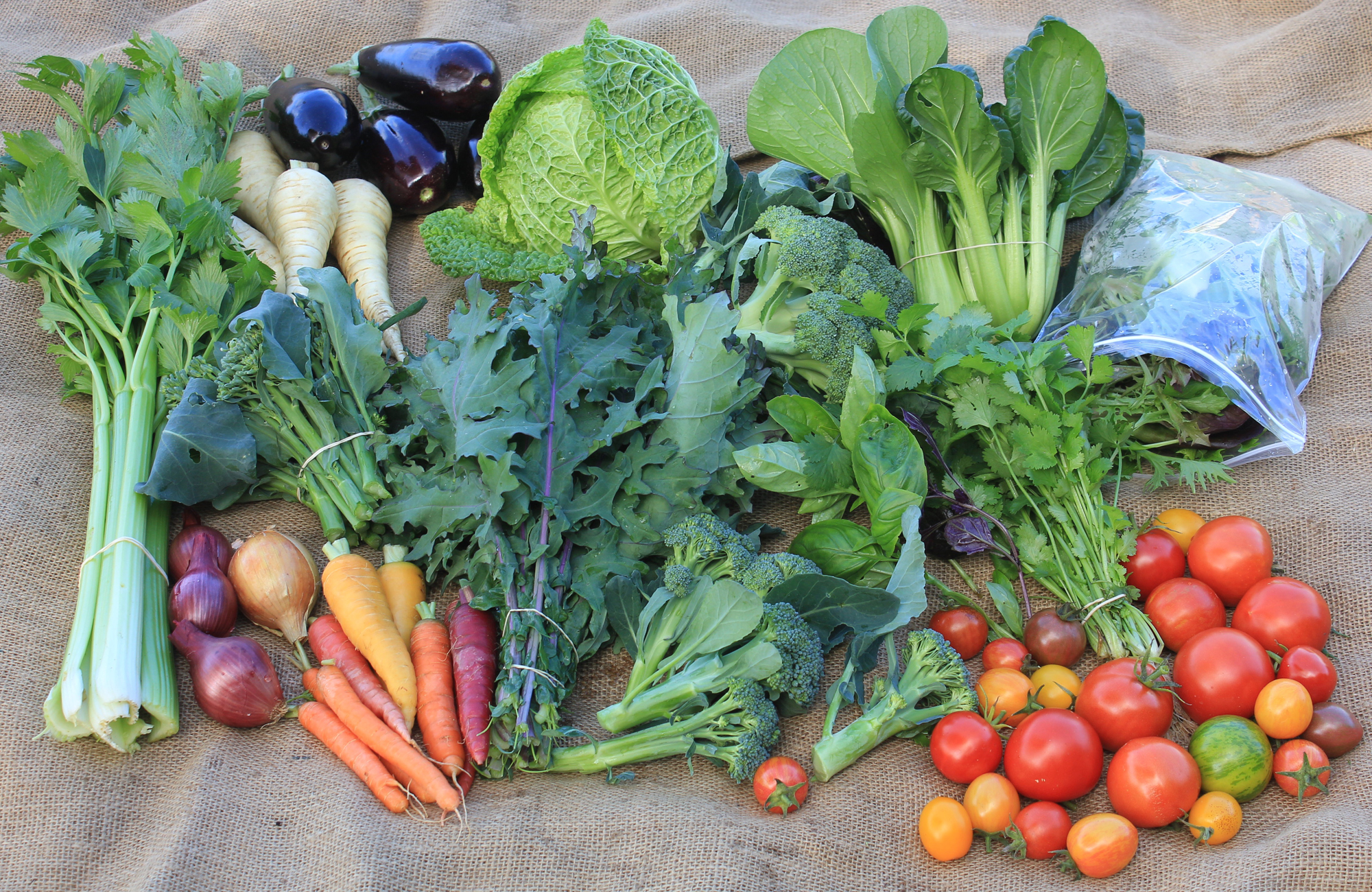 Large Veggie Box from May 2018: celery, parsnips, eggplant, savoy cabbage, broccoli, bok choi, salad mix, parsley, basil, tomatoes, broccolini, kale, carrots, red and brown onions.