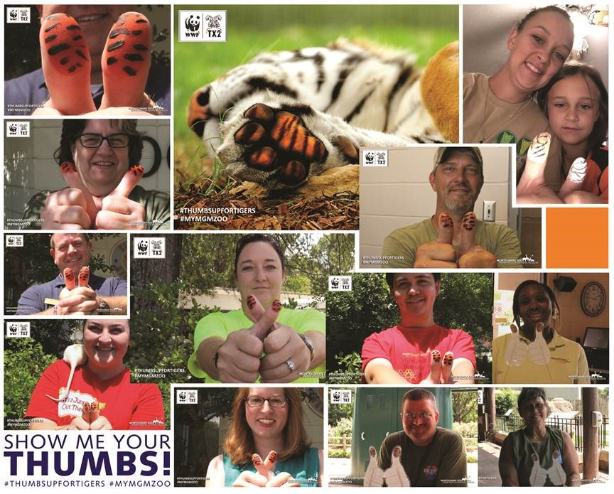 """Public participation in a Social Media Campaign I designed for WWF's TX2 initiative entitled """" Thumbs Up For Tigers ."""""""