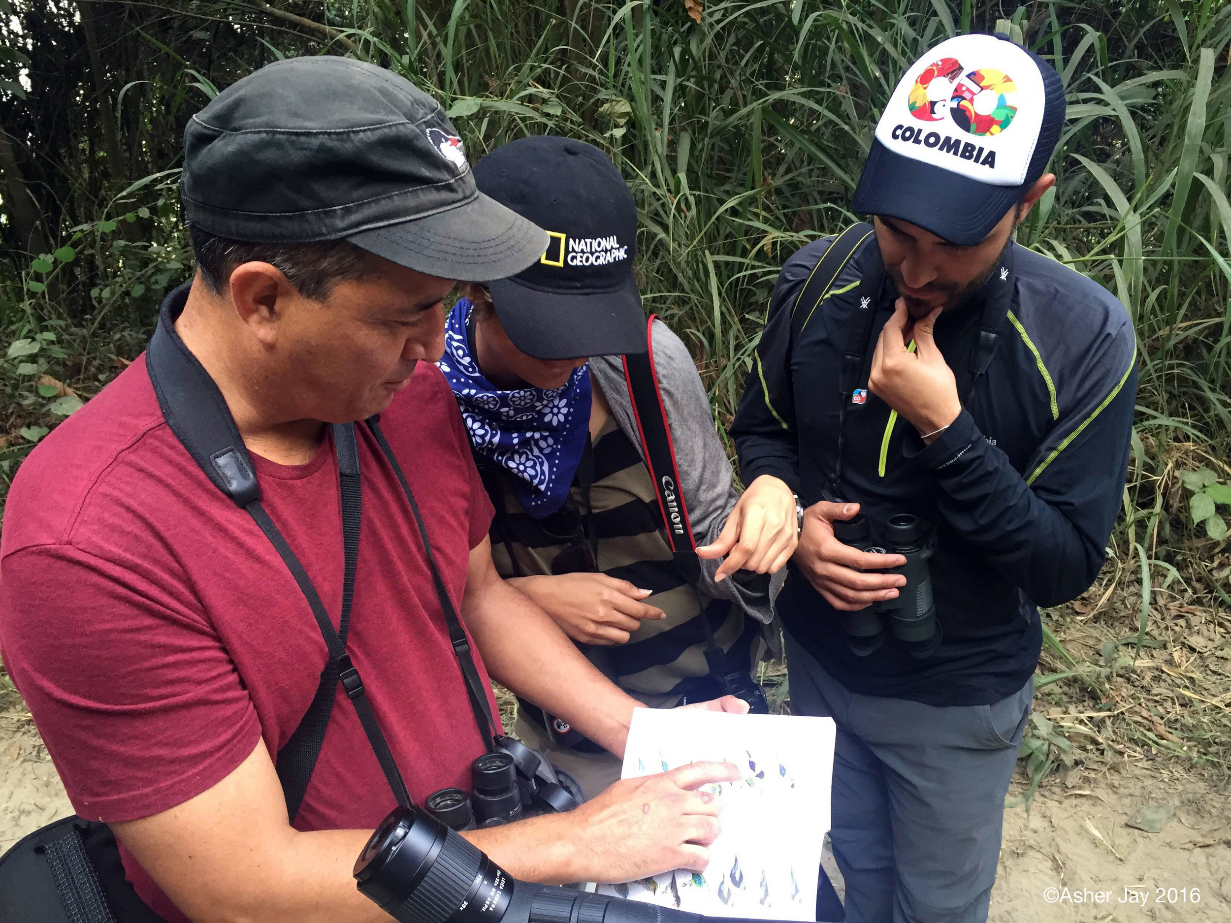Alvaro Jaramillo pointing out the bird species we just saw in the Birds of Colombia guide book to Juan-Pablo (works on Colombia's tourism outreach) and me (the girl who spots leaves and lasers as birds.)