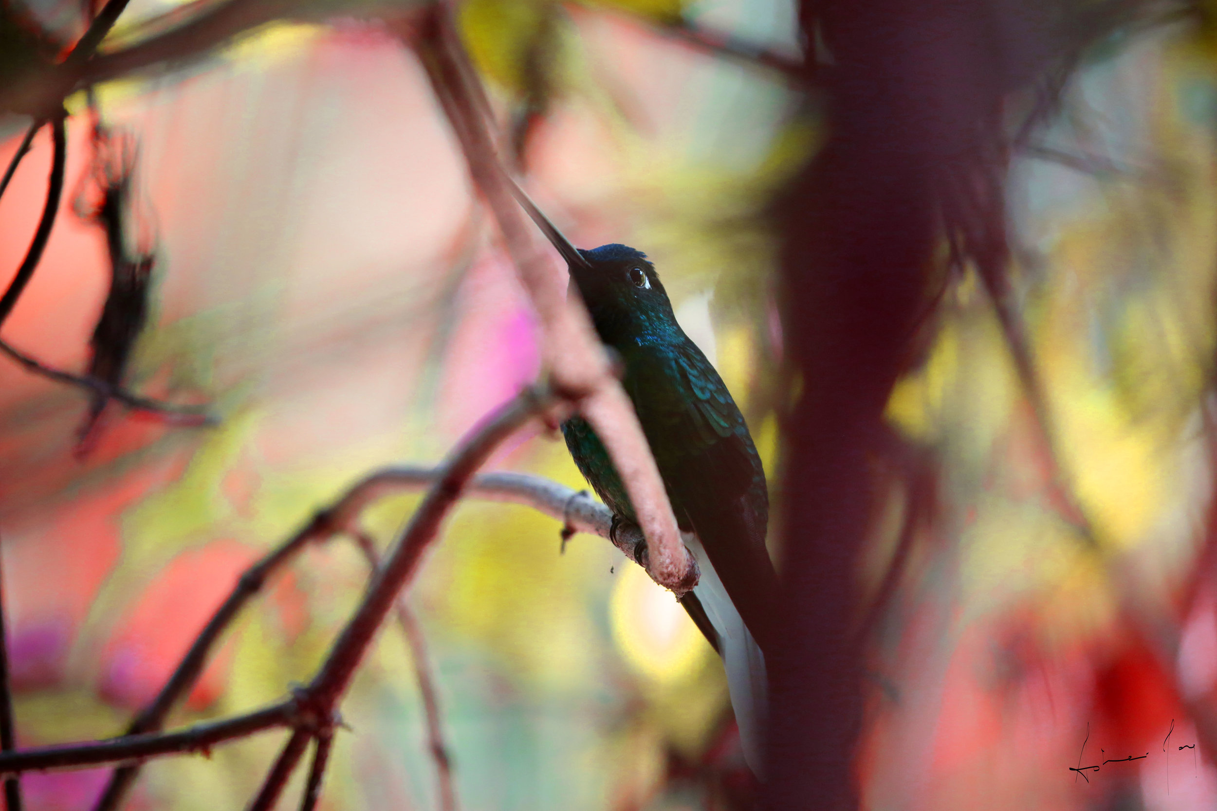Bird in the Brush by Asher Jay