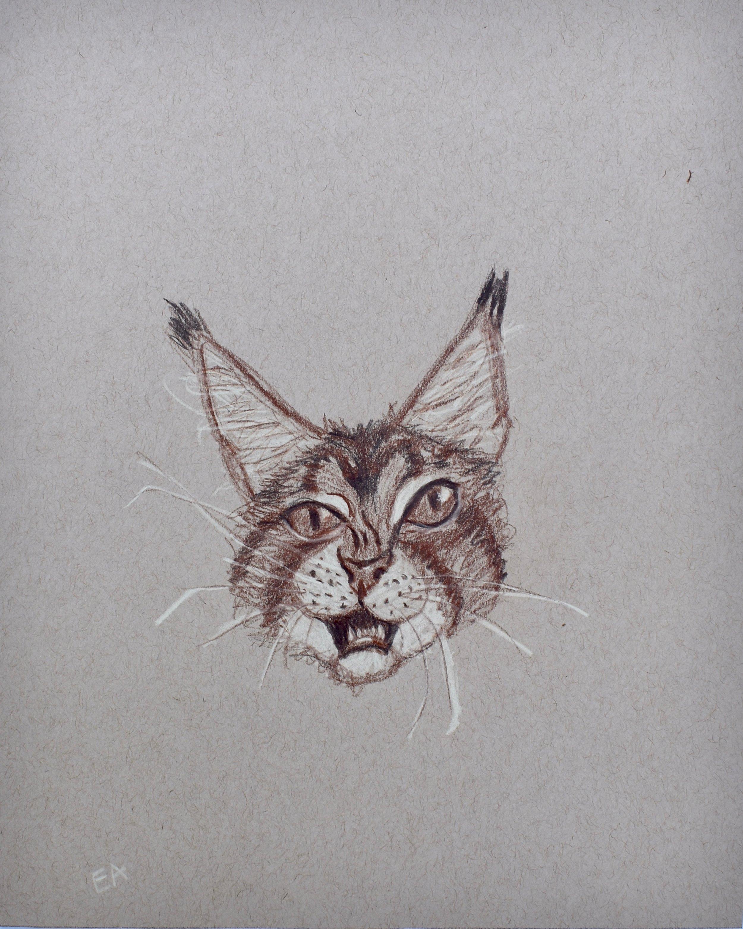 """Frank"" 8x10 Prismacolor Pencil on toned paper."