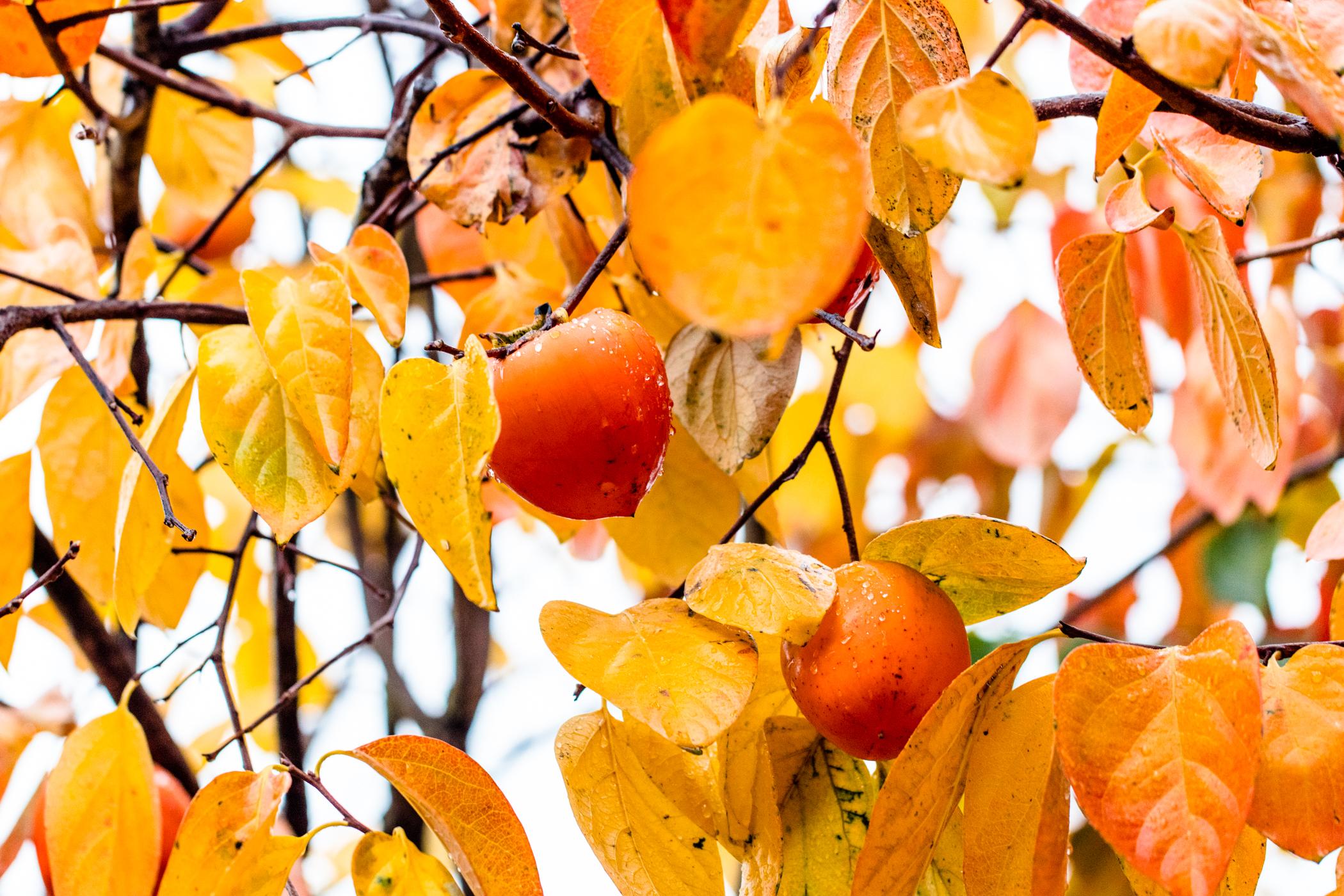 fall_foliage_nicolaparisi_0086.jpg