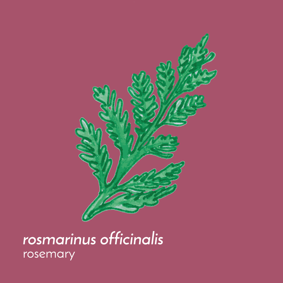 RosemaryFlowerEssence-Front-01.png