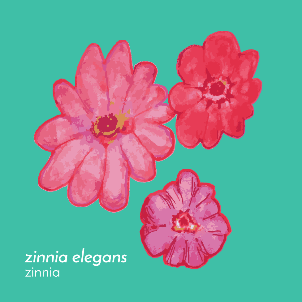 ZinniaFlowerEssence-Front-01.png