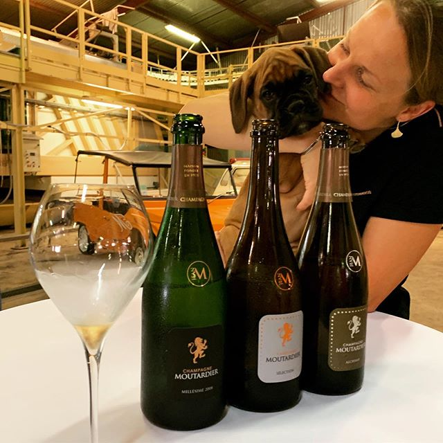 Saying hello to the new wine yard dog, Prima,  at @champagnemoutardier. Thanks to Simon for a great tasting🥂