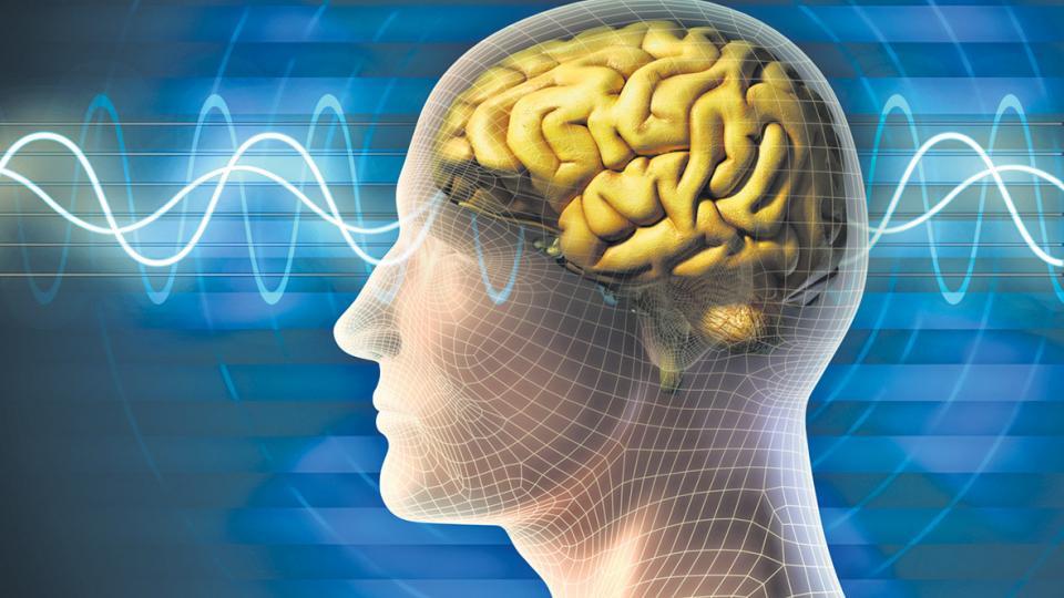 Peak Brain Performance Englishtown.jpg