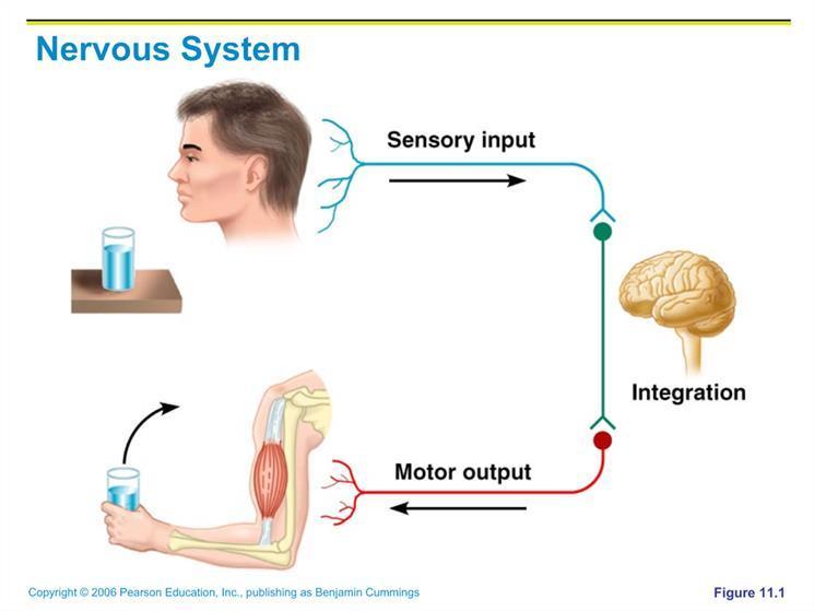 Sensory Motor Integration Belmar.jpg