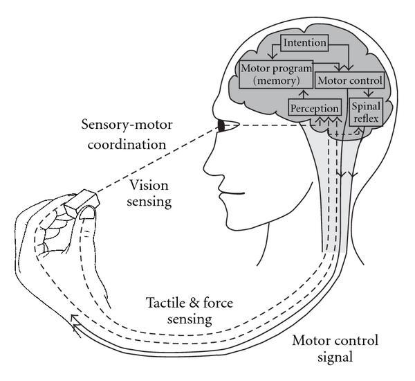 Sensory Motor Integration Sea Bright.jpg