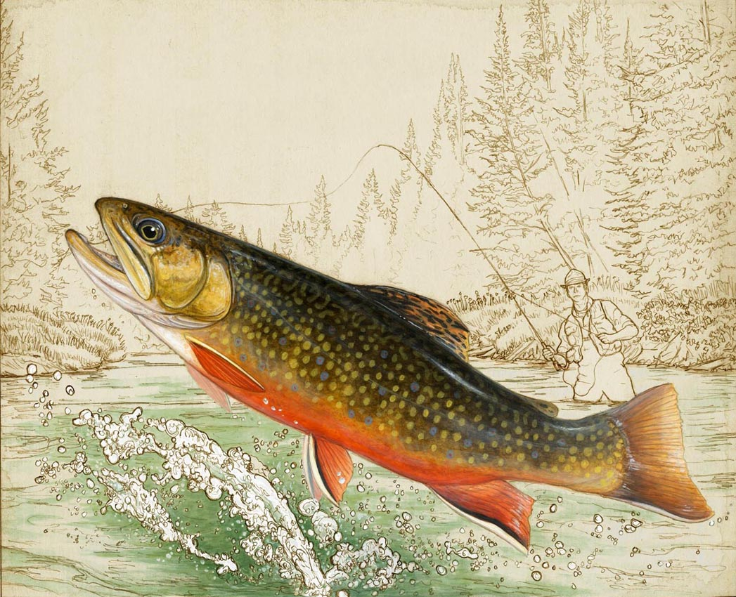 Limited Edition Brook Trout Print - Orvis Exclusive   I recently created this limited edition print (above) for Orvis which is available exclusively through them (https://www.orvis.com/p/limited-edition-brook-trout-print/2xgp). I haven't really ever created anything like this before. The idea was to do something that was half painting, half drawing. I did the drawing in pencil with a stained coffee background and then painted the fish with acrylics. I also used thin washes to add some color into the drawing around the trout. The size of the print will be 16x20 and it will be framed in a rustic Adirondack style frame.