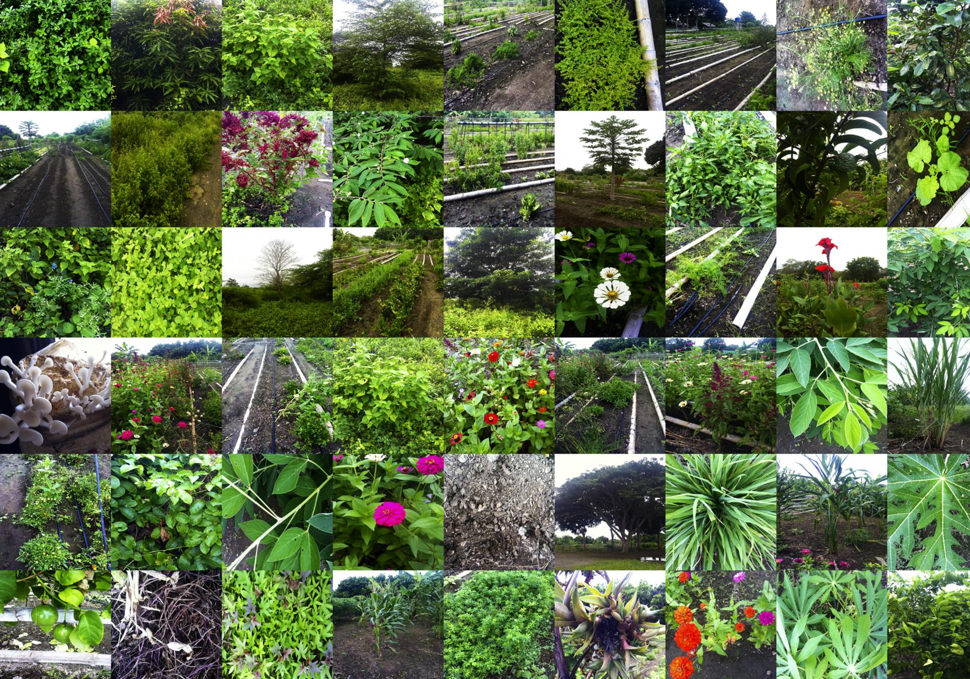 vegetacion.jpg