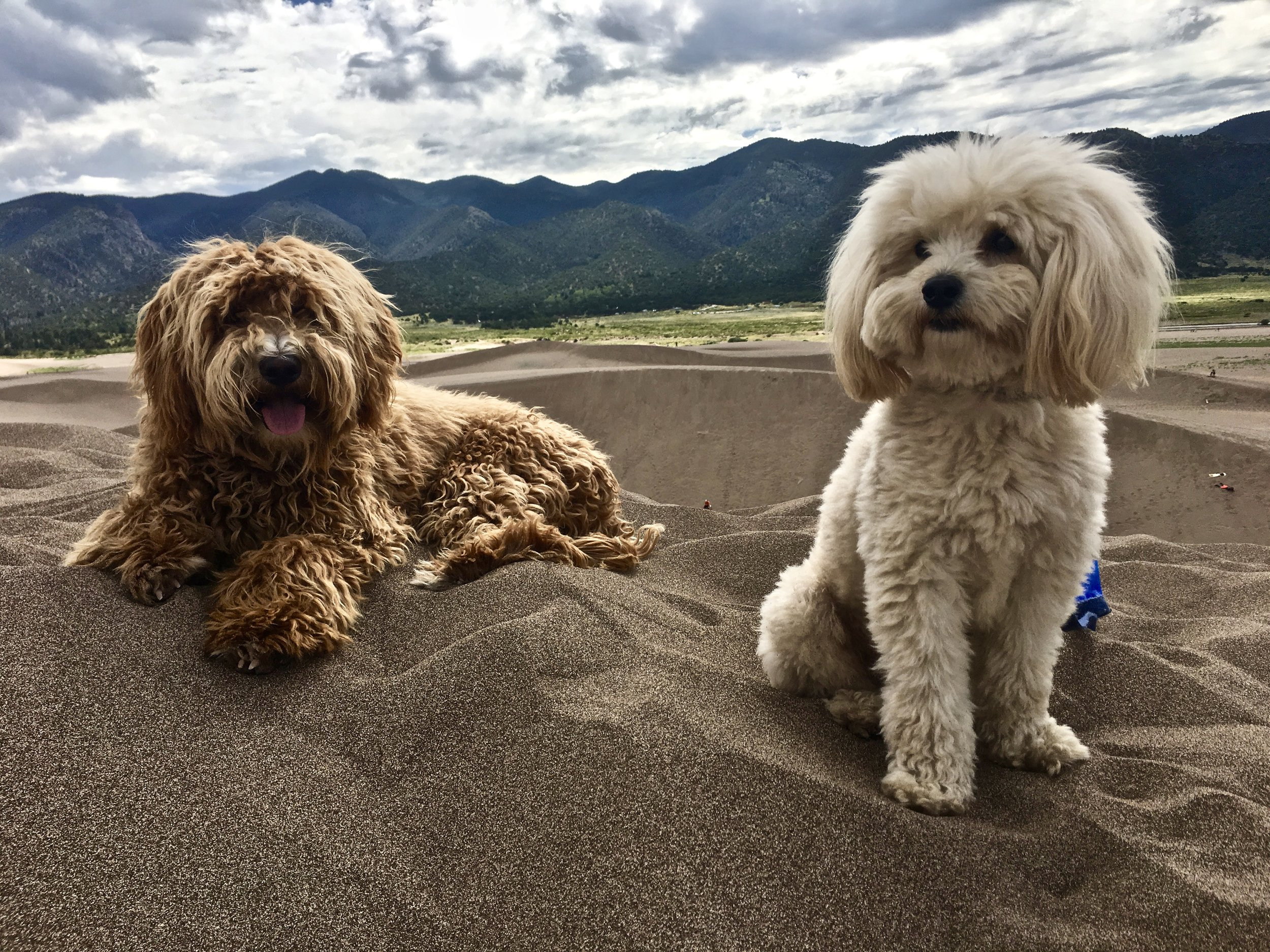 Calhoun and Frisco at Great Sand Dunes CO