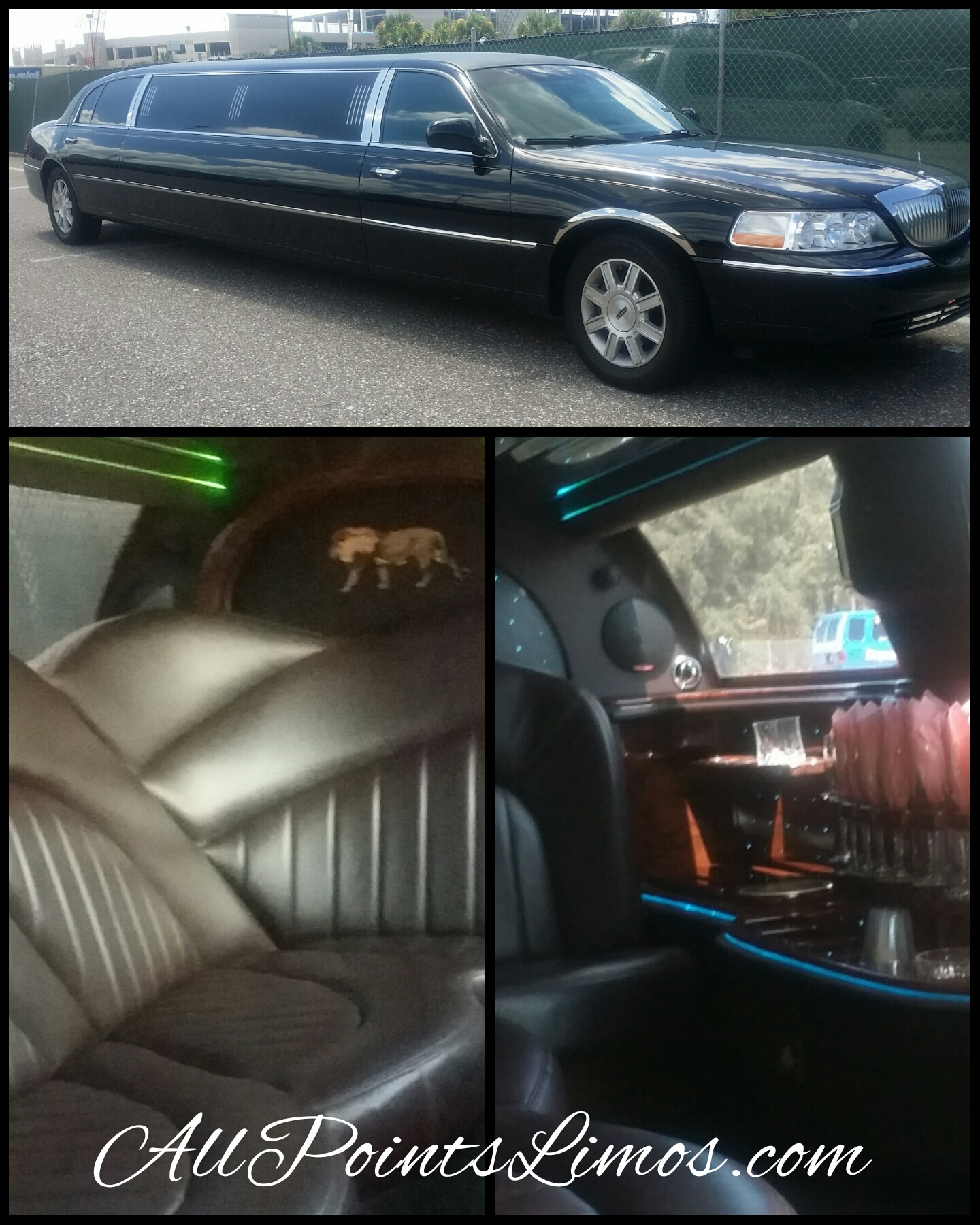 some Chauffeurs for All Points Limousine of St. Petersburg, FL.  have been residents of Pinellas County for many years.  has a very impressive Limo Security back grounds they Love helping others.