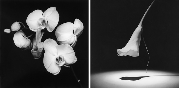 Tv: Orchid, 1989. Th: Calla Lily, 1986. Photos by Robert Mappelthorpe © Robert Mapplethorpe Foundation.