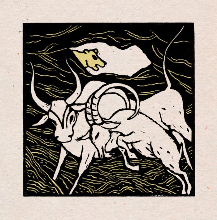 Geden og tyren.
