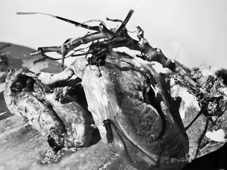 """Morten Rockford Ravn  """"Outbreak"""" , 2016 (Fotografi)."""