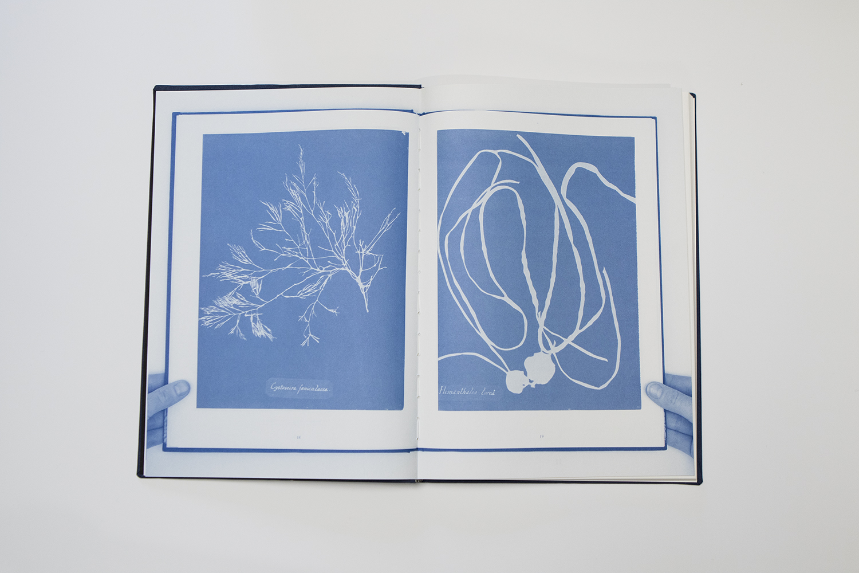 "Nanna Debois Buhl ""Botanizing on the Asphalt""   Fotos: I DO ART Agency."