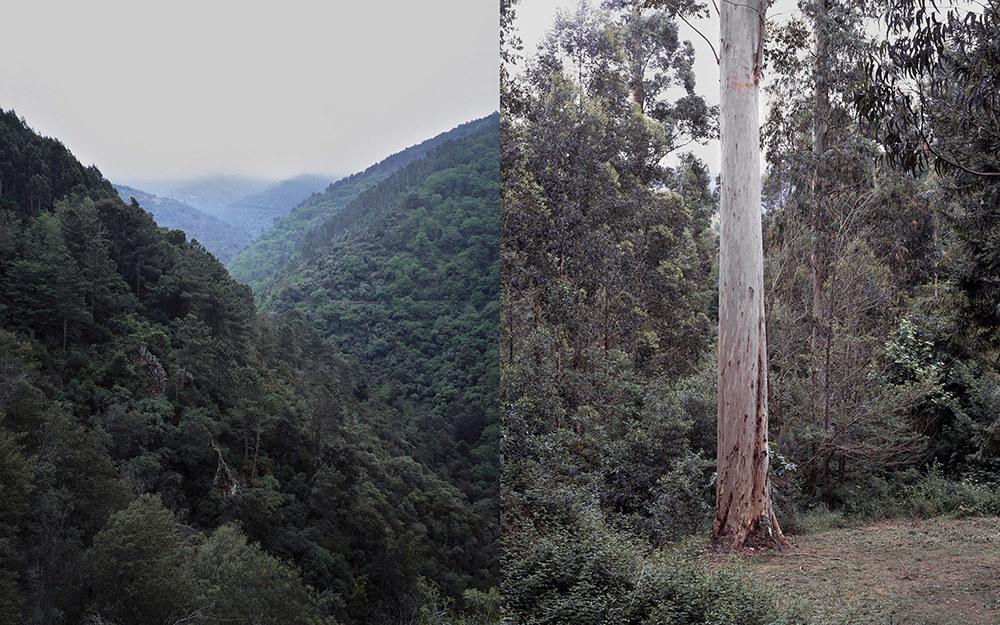 Left: Clément Verger, Coimbra district   Right: Clément Verger, Tallest tree in Europe, Karri Knight.