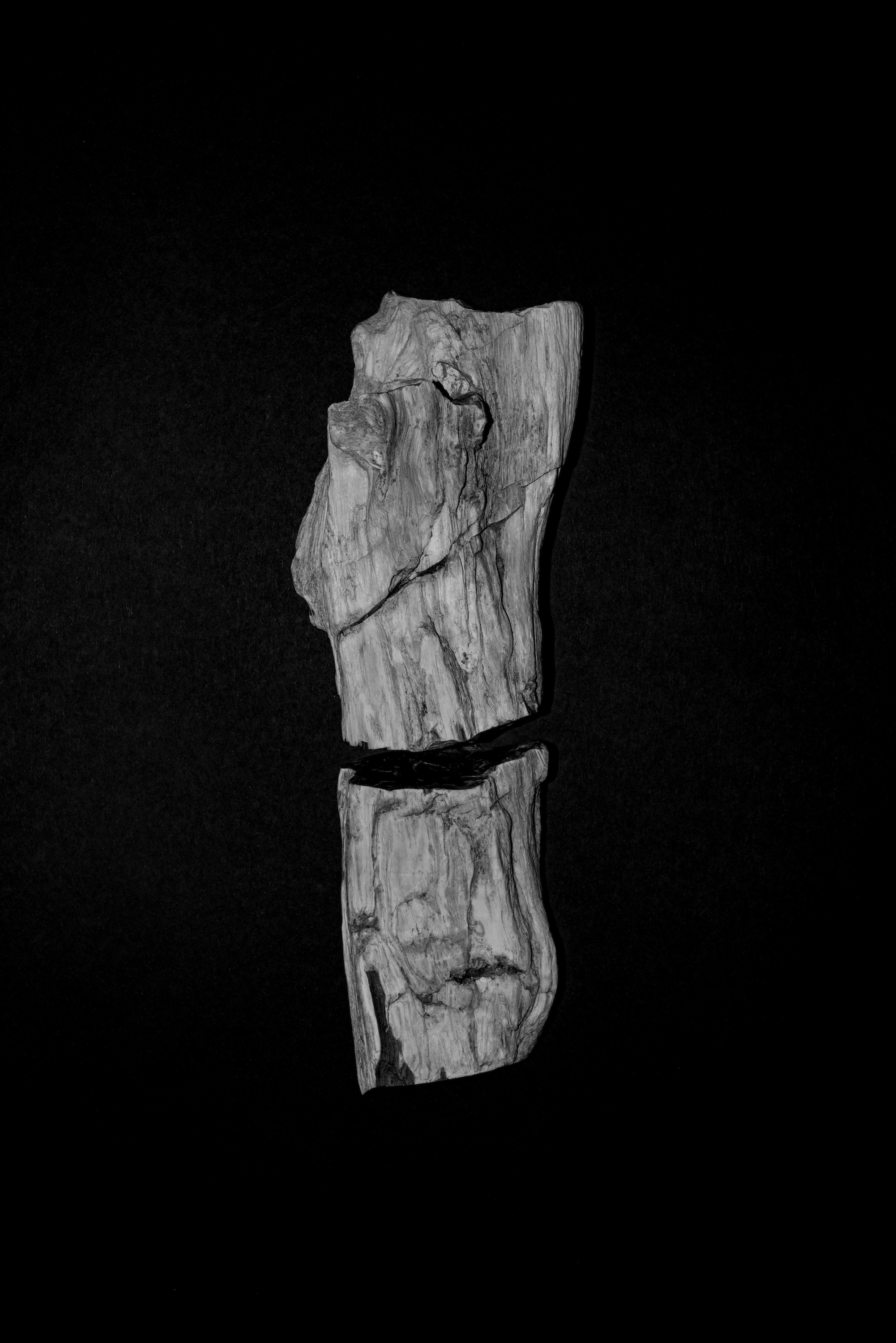 Peter Granser, Fossilized Branch.