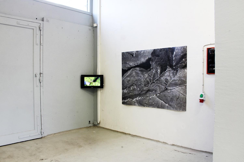 Julia Martin, Rhubarb Archaeology. Pirpa, 2018. Fotos © Pirpa.