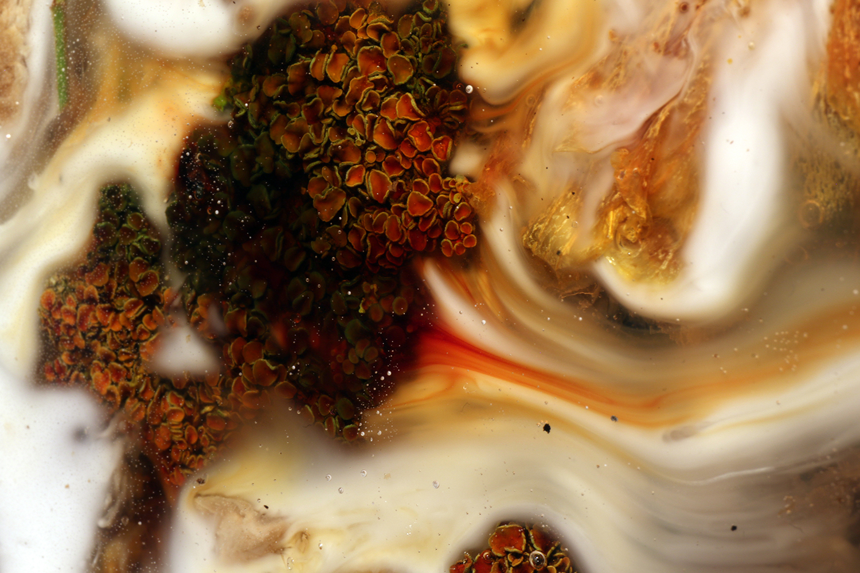 "Studio ThinkingHand ""Landscape Portrait #7,� 2018 (Epoxy, flora, fungi. Foraged september 2018 from Sjælland, DK. 108(ø) x 4(d) cm)."