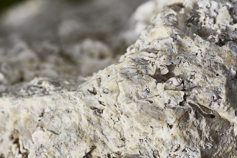 Fossiler af havskabte væsener. Foto: Lea Jessen.