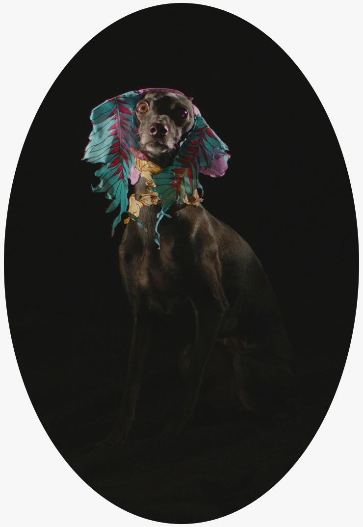 Kim Richard Adler Mejdahl, Puppymaster, 2019.