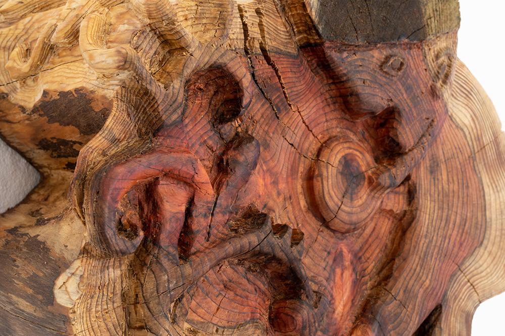 Nissen finder globen blandt Bayeuxtræer, vandgran. Foto: Jesper Nørbæk.
