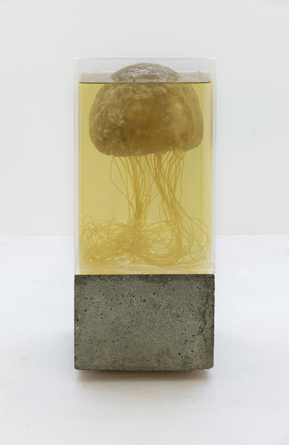 Silas Inoue, Future Friture - Turritopsis dohrnii, 2018.  Courtesy kunstneren og noma.