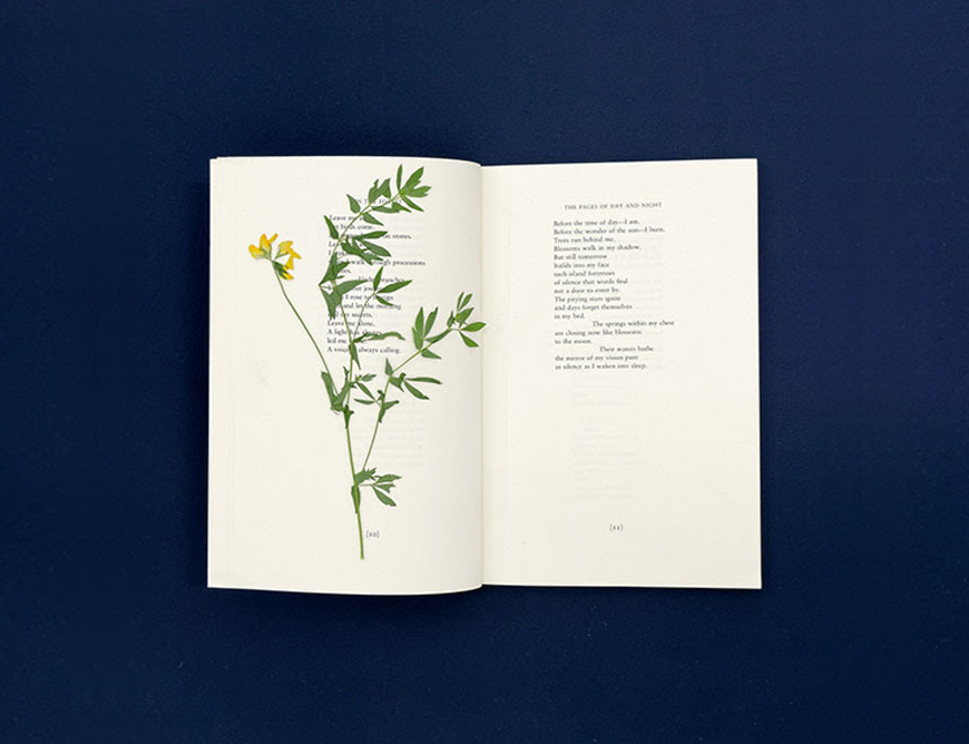 Pia Rönicke Adonis. The Pages of Day and Night, The Marlboro Press / Northwestern, 1994. Lathyrus pratensis, 2015.  Photo: Aurélien Mole. Courtesy of the artist and gb agency, Paris.