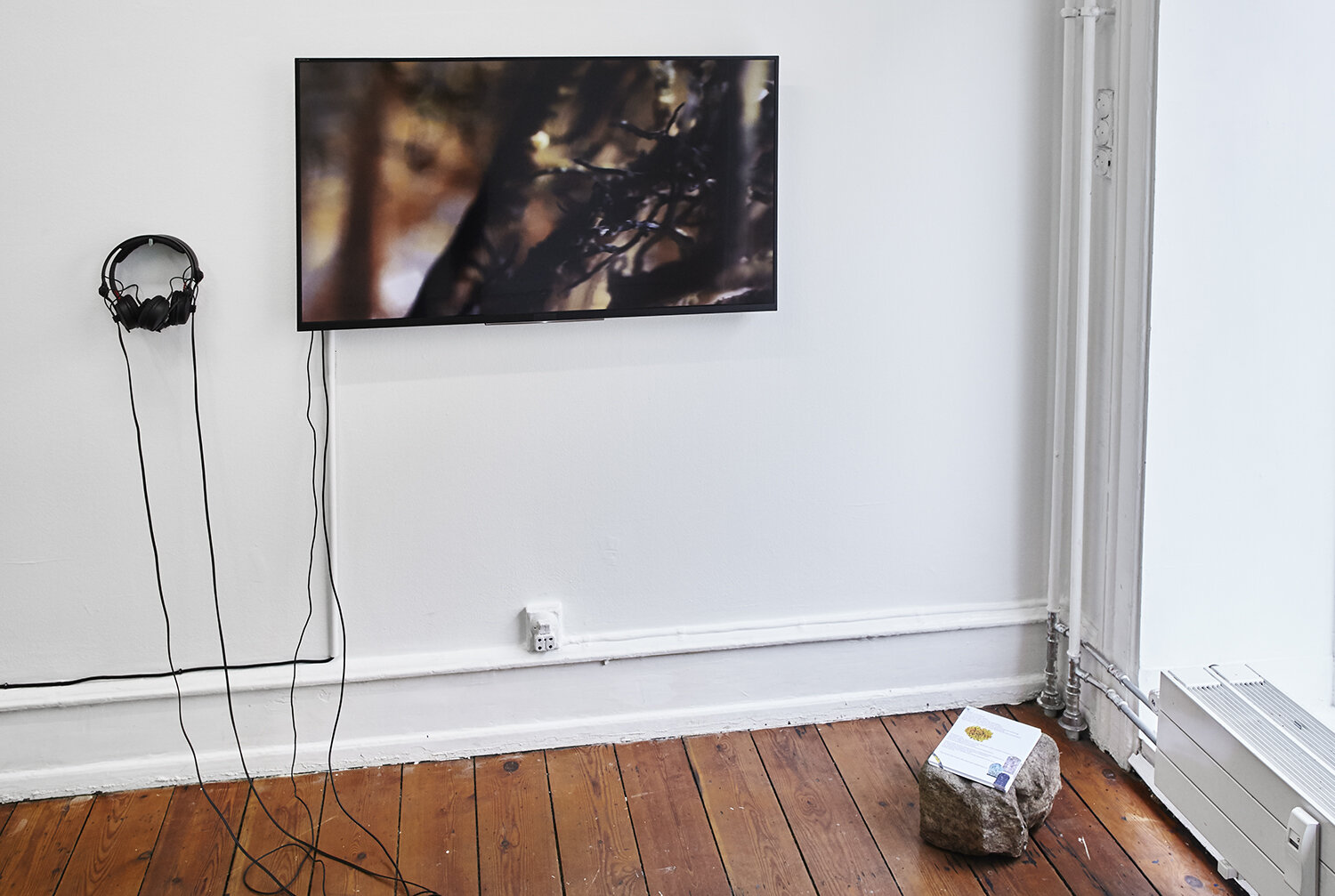 Arendse Krabbe in collaboration with lichen, Among sister Venus and earthlings; Bacteria, Lichen and me. One Channel HD Video, Looping, Duration 10:37min, 2017. Sound design in collaboration with Martin Gru. The work was kindly sponsored by Canon. Photo: SixtyEight Art Institute, 2019.