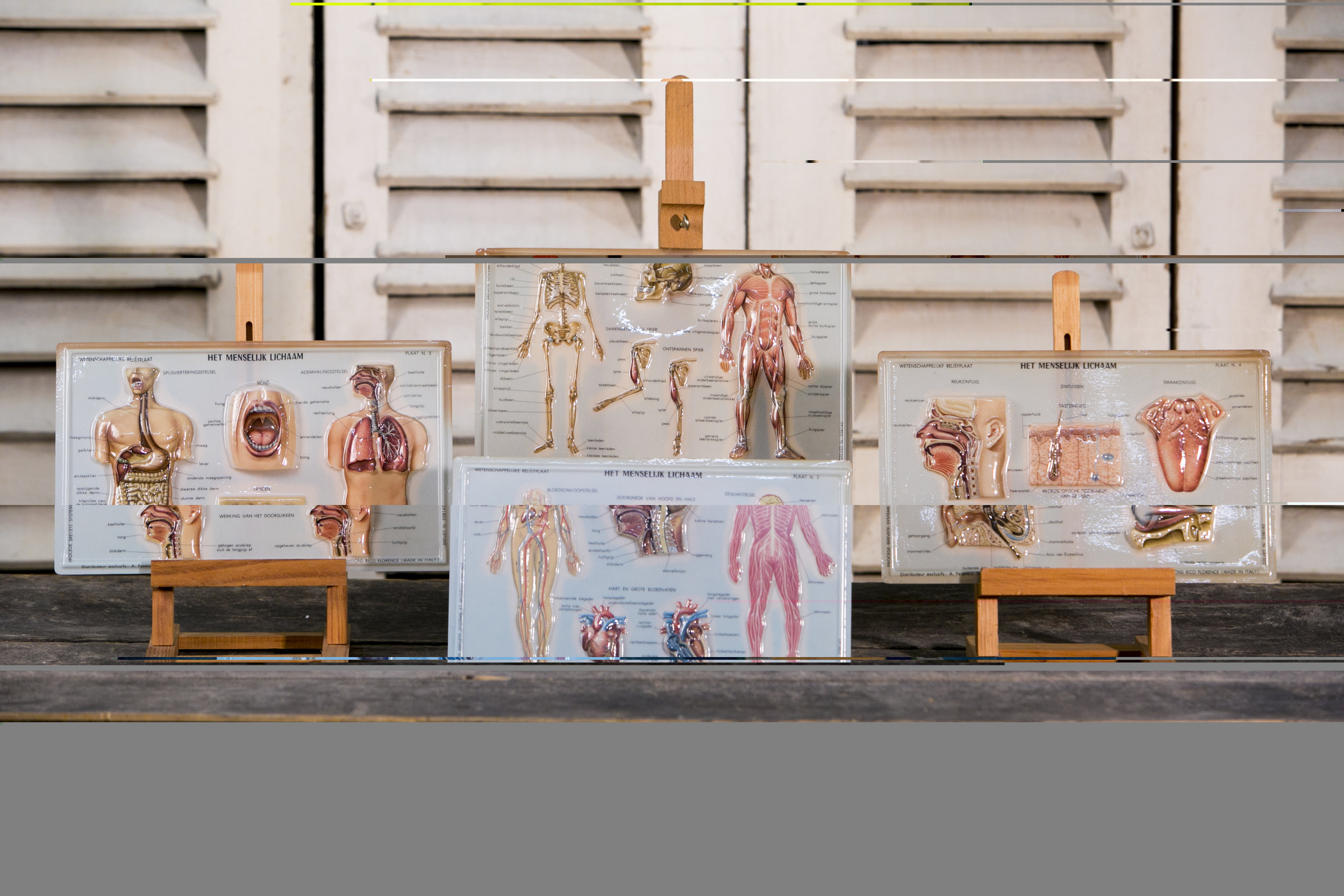 Unusual Belgian Anatomy Diagrams