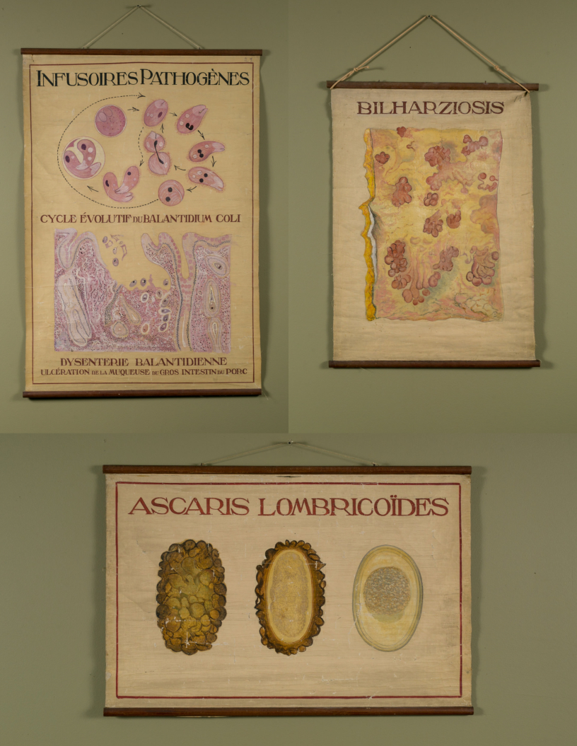 Set of Three Hand-Painted Teaching Charts of Aquatic Parasites and Diseases