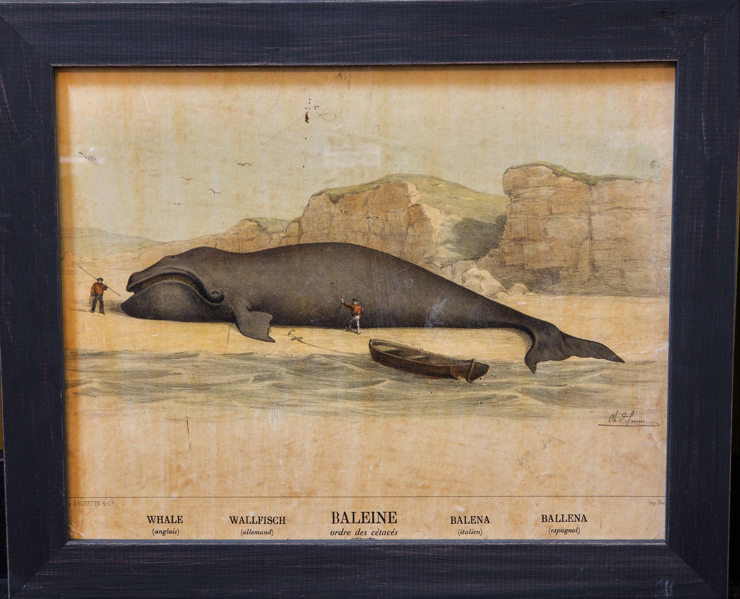 Antique Whale Print