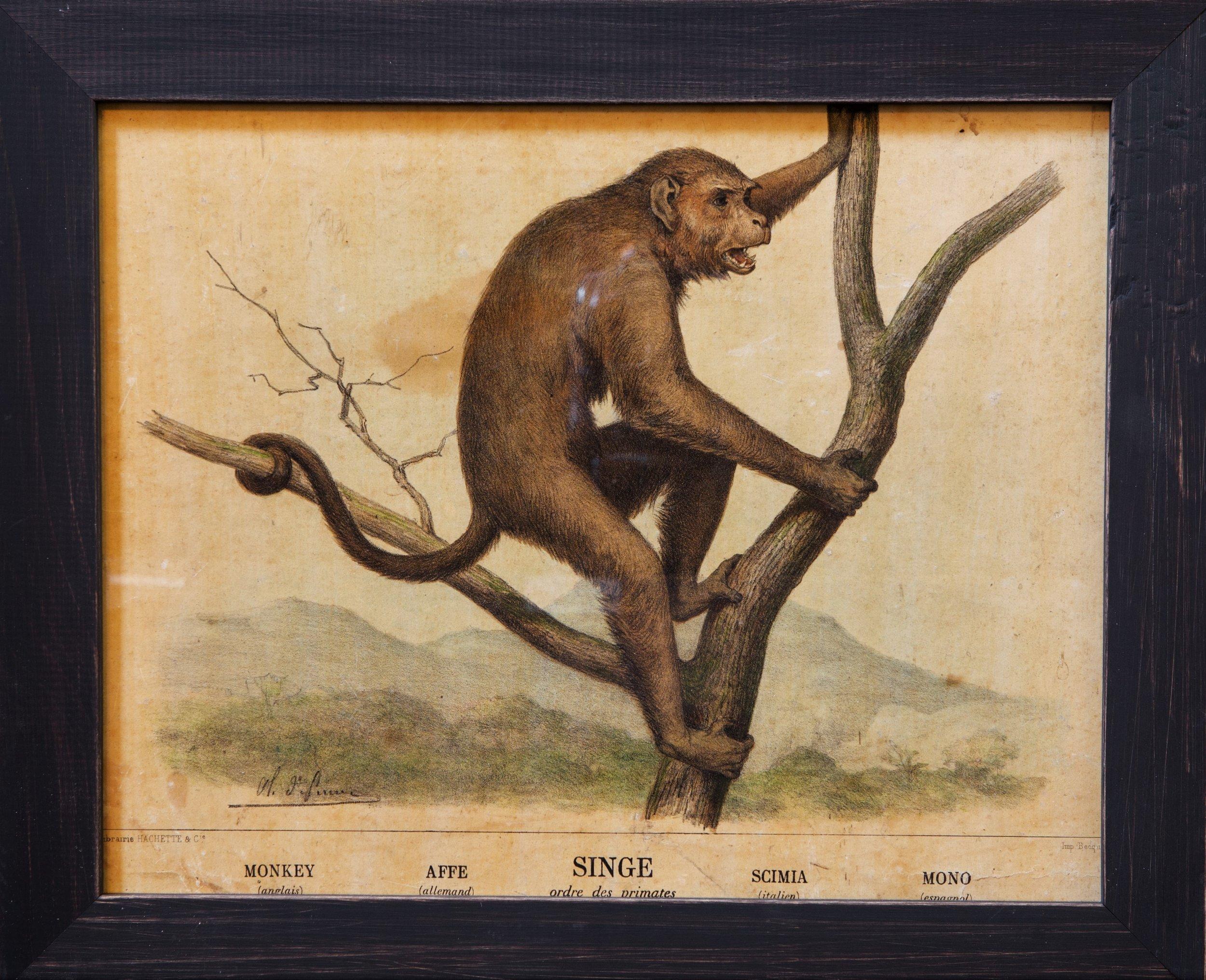 Antique Monkey Print