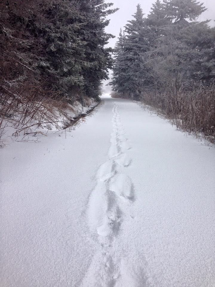 beast pic snow trail.jpg
